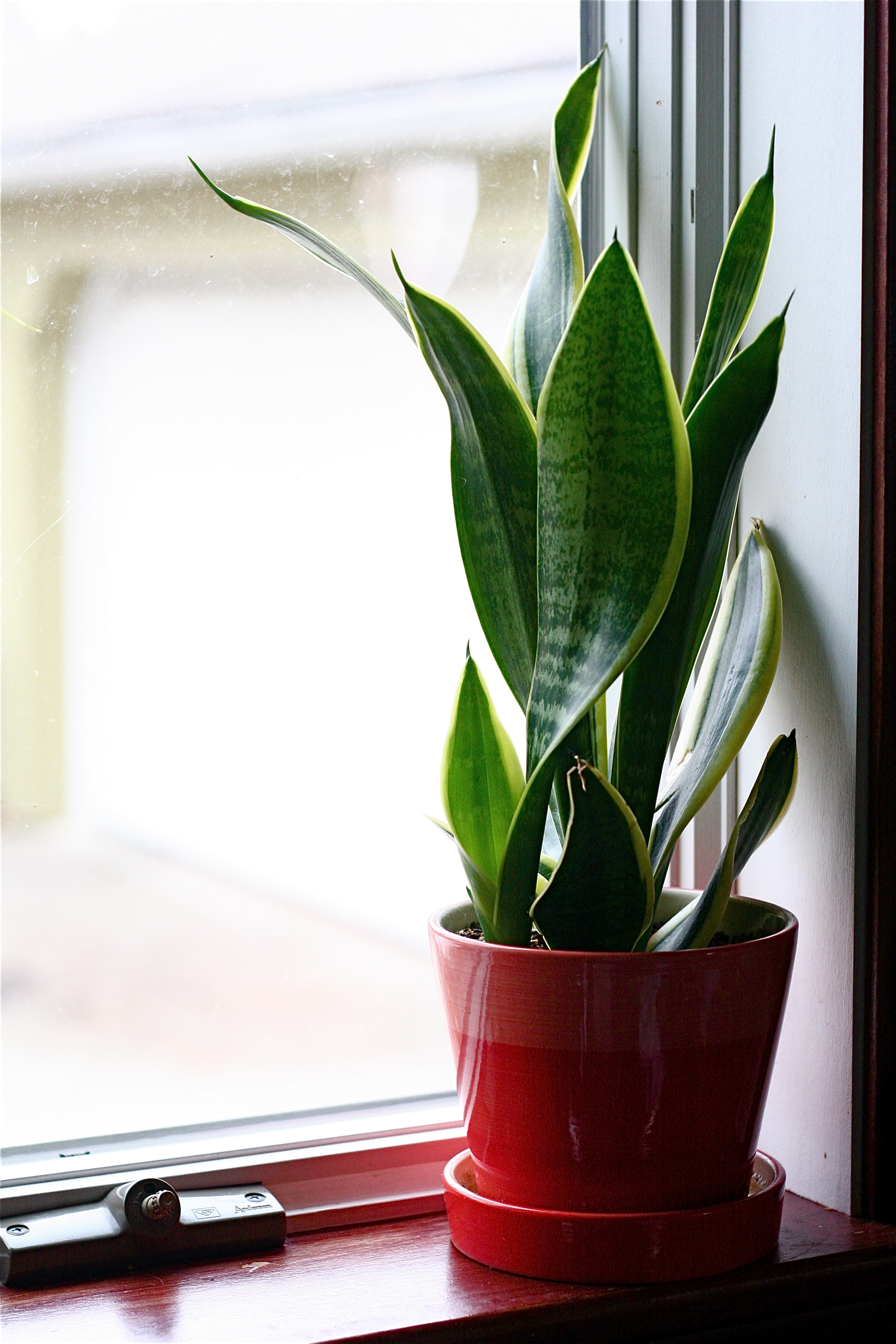 Best Houseplants For Low Light Almost The Real Thing